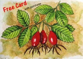 Rosehip Seed Watercolor hand painted Card